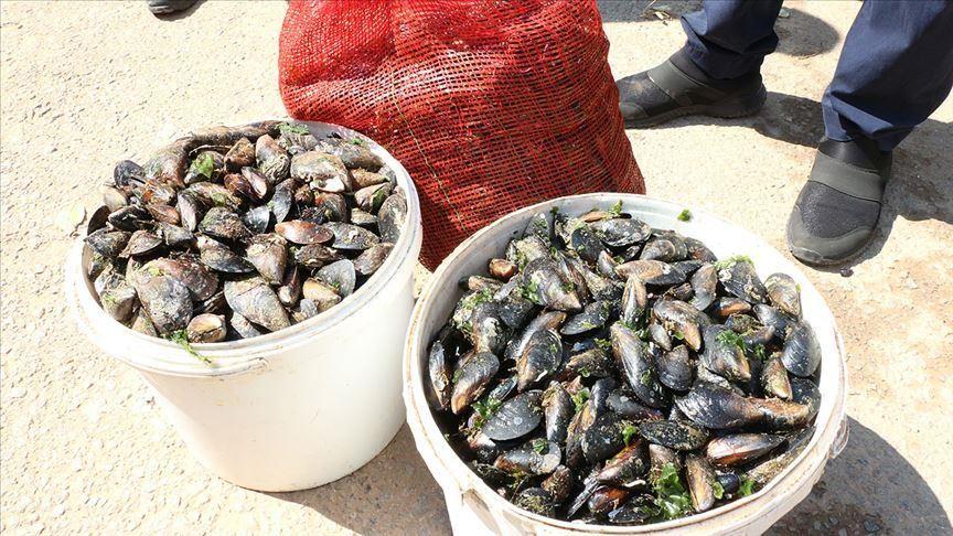 كمية من بلح البحر المضبوط