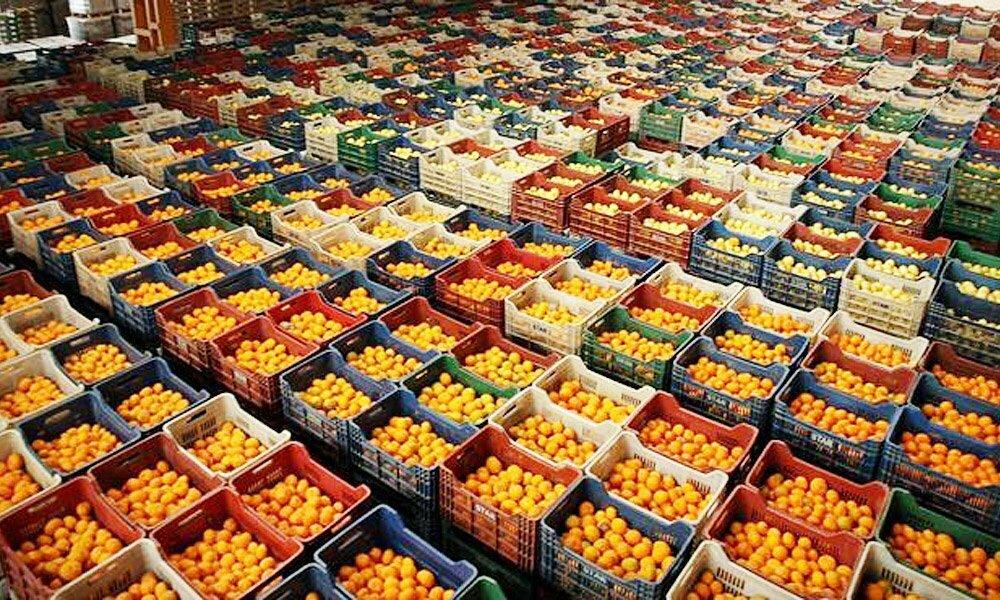 صادرات الحمضيات التركية تصل الى رقم قياسي ..روسيا على رأس القائمة