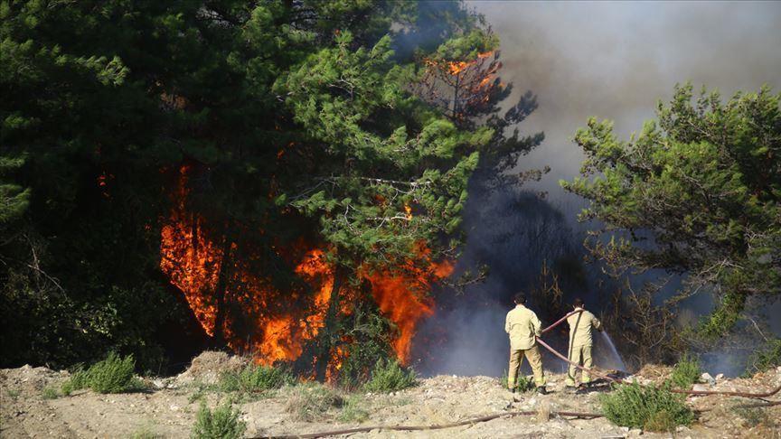 تركيا تسيطر على حرائق غاباتها