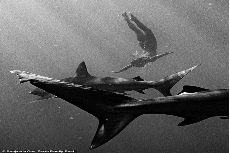 عارضة أزياء تتجرد من ملابسها بالكامل وتغوص مع أسماك القرش المفترسة