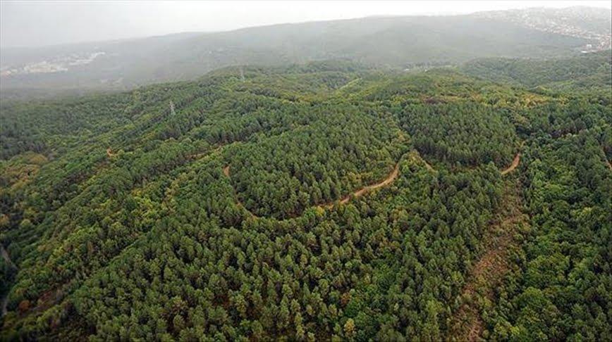 غابات جديدة بفعل أعمال التشجير في تركيا