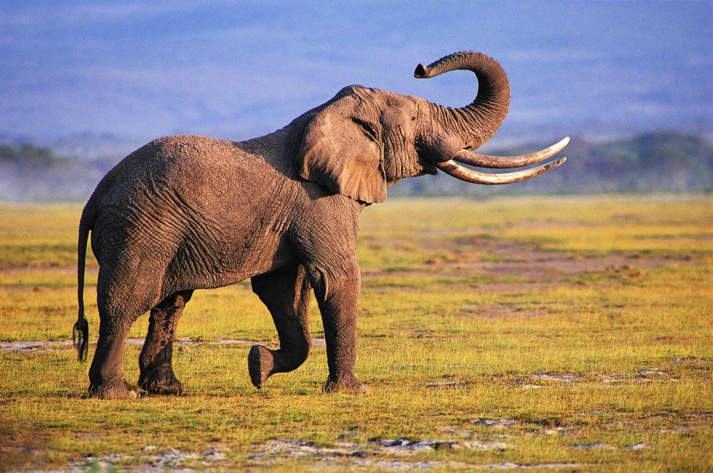 عراكٌ بين فيلَيْن في العرض الصباحي