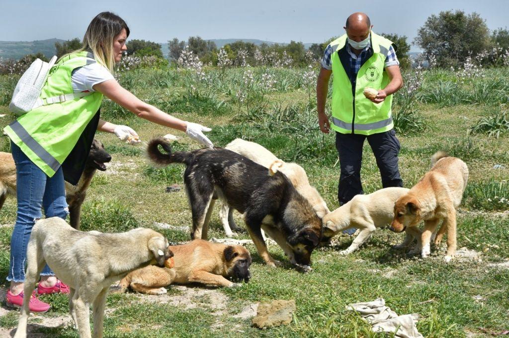متطوعون يسخرون وقتهم لإطعام الحيوانات وسط الإغلاق الشامل في تركيا