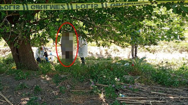 الشرطة التركية تعثر على جثة معلقة على شجرة في أيدين